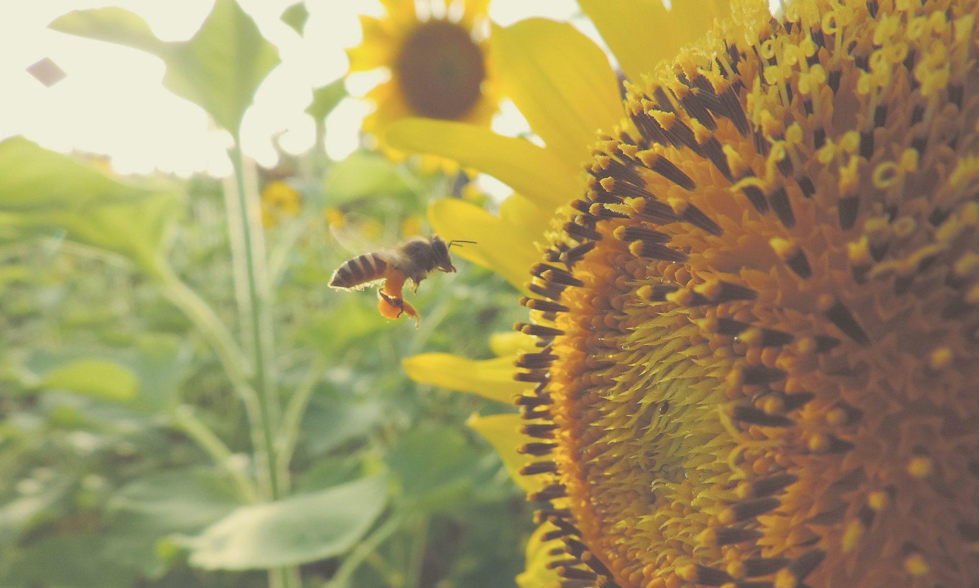 Čebelarsko društvo Sevnica